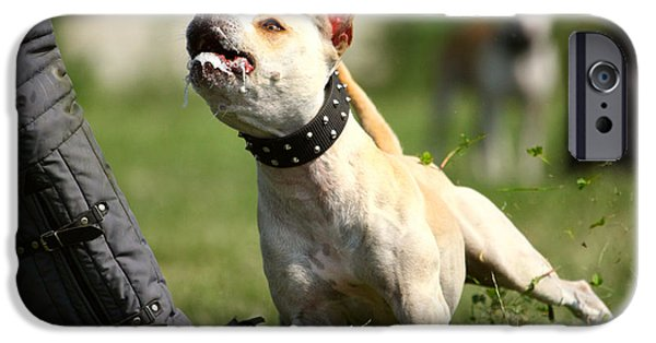 Dog In Landscape iPhone Cases - Dont You dare to Move iPhone Case by Charlie Photographer