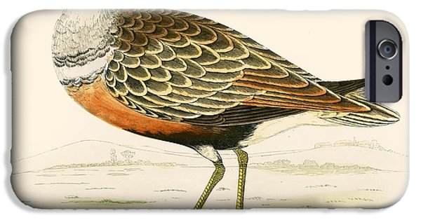 Hunting Bird iPhone Cases - Dotterel iPhone Case by Beverley R. Morris