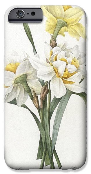 Florals iPhone Cases - Double Daffodil iPhone Case by Pierre Joseph Redoute