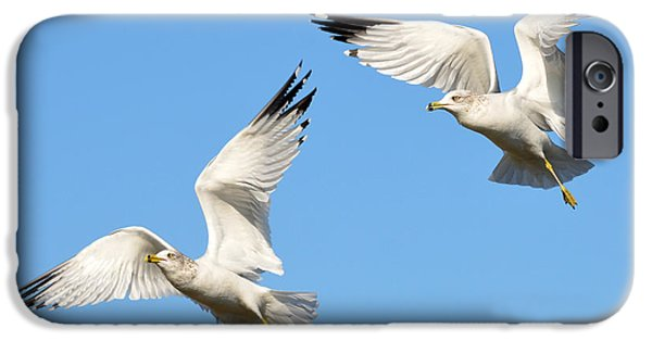 Seagull iPhone Cases - Double Decker 2 iPhone Case by Fraida Gutovich