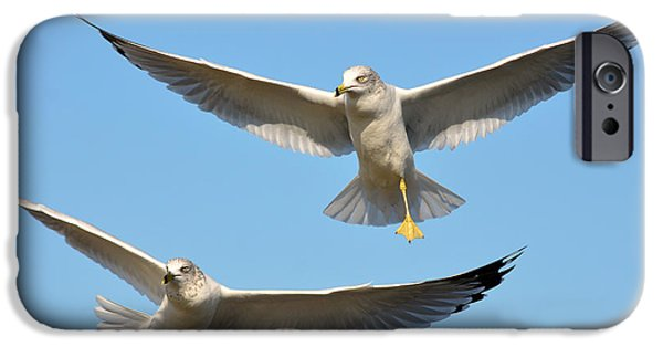 Seagull iPhone Cases - Double Decker iPhone Case by Fraida Gutovich