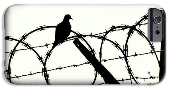 Freedom iPhone Cases - Dove Mourning iPhone Case by Joe Jake Pratt
