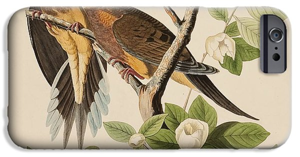 Wild Life Drawings iPhone Cases - Doves iPhone Case by Celestial Images