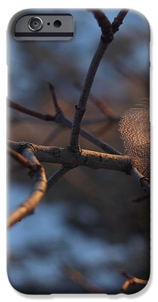 Downy Feather Backlit on Wintry Branch at Twilight iPhone Case by Anna Lisa Yoder