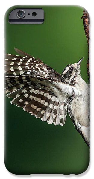 Woodpecker iPhone Cases - Downy Woodpecker Female iPhone Case by Bill  Wakeley