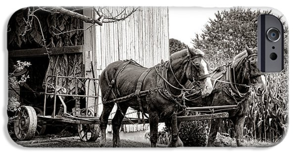 Amish iPhone Cases - Draft Horses at Work iPhone Case by Olivier Le Queinec