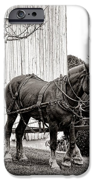 Draft Horses at Work iPhone Case by Olivier Le Queinec