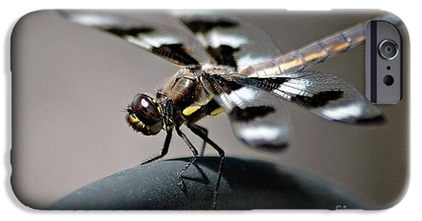 Insect Pyrography iPhone Cases - Dragon Fly iPhone Case by Shannon Scott