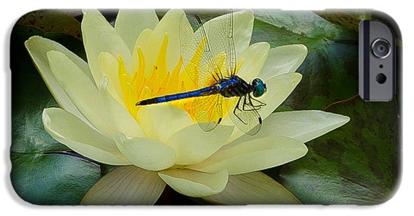 Insect Pyrography iPhone Cases - Dragon Lily iPhone Case by Crystal Crist