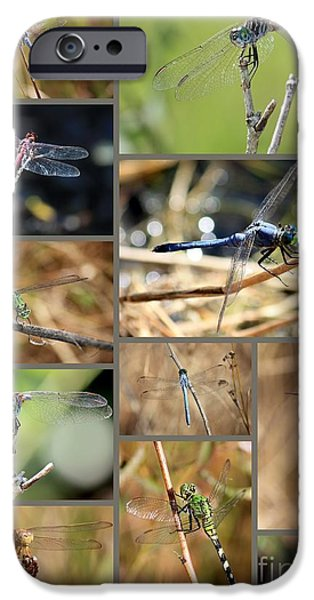 Dragonfly Collage iPhone Case by Carol Groenen