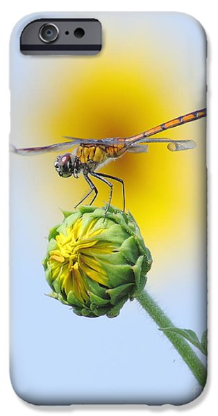 Dragonfly In Sunflowers iPhone Case by Robert Frederick