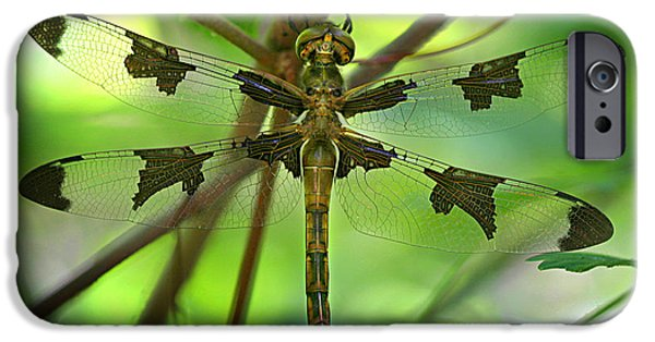 Dragonfly iPhone Cases - Dragonfly  iPhone Case by Jeff Klingler