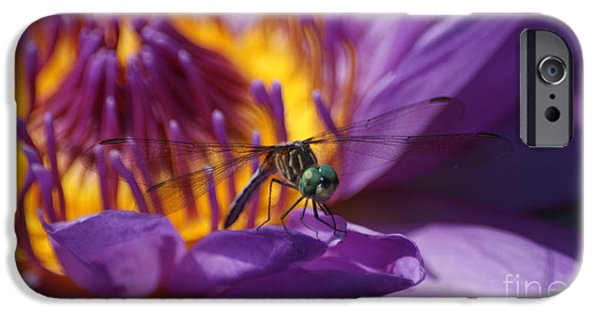 Etc. Photographs iPhone Cases - Dragonfly looking at you... iPhone Case by Rob Luzier
