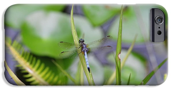 Dragonfly iPhone Cases - Dragonfly on Grass over Pond with Fish iPhone Case by Wayne Nielsen