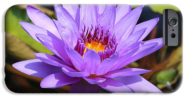 Purple And Green iPhone Cases - Dragonfly on Water Lily Square iPhone Case by Carol Groenen