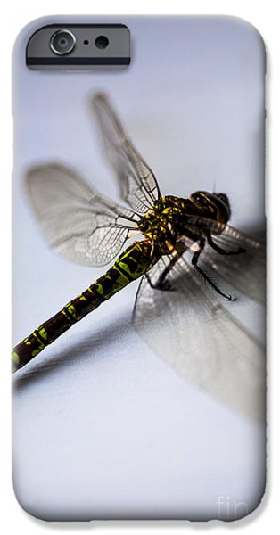 Dragonfly iPhone Cases - Dragonfly Portrait iPhone Case by Jan Bickerton