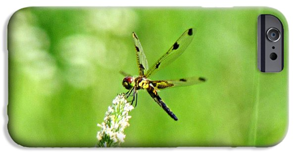 Maine iPhone Cases - Dragonfly iPhone Case by Vikki DePietro