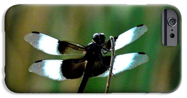 Bugs Pyrography iPhone Cases - Dragons Among Us The Sunbather iPhone Case by Andrew  Stoffel