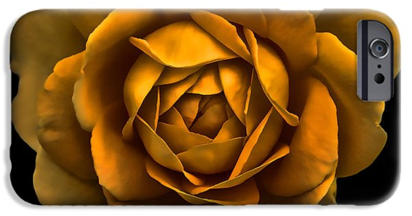 Gold Rose iPhone Cases - Dramatic Golden Rose Portrait iPhone Case by Jennie Marie Schell