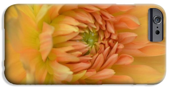 Botanical Photographs iPhone Cases - Dreamy Dahlia iPhone Case by Kathleen Struckle