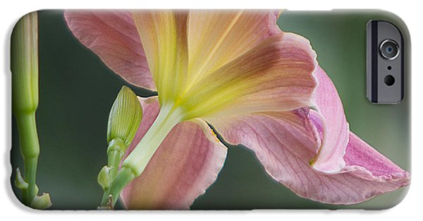 Florals Glass Art iPhone Cases - Dreamy Daylily iPhone Case by Patti Deters