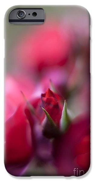 Floribunda iPhone Cases - Dreamy Nest iPhone Case by Mike Reid