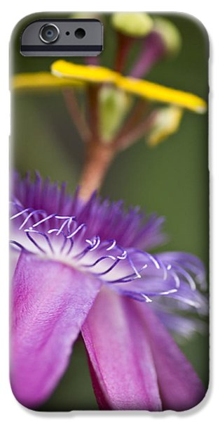 Passionflower iPhone Cases - Dreamy Passion iPhone Case by Priya Ghose