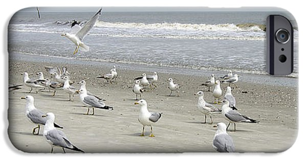 Photos Of Birds iPhone Cases - Dress Left iPhone Case by Skip Willits