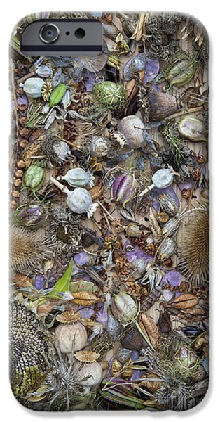 Dried iPhone Cases - Dried Flower Seeds iPhone Case by Tim Gainey