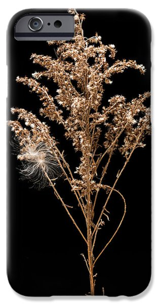 Dried iPhone Cases - Dried Goldenrod iPhone Case by Steve Gadomski