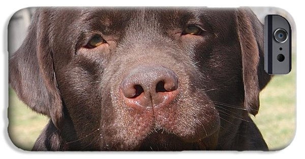 Chocolate Lab iPhone Cases - Drifter iPhone Case by Betty Baker