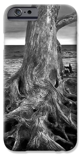 Driftwood on Jekyll Island Black and White iPhone Case by Debra and Dave Vanderlaan