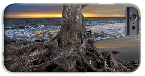 Dave iPhone Cases - Driftwood on Jekyll Island iPhone Case by Debra and Dave Vanderlaan
