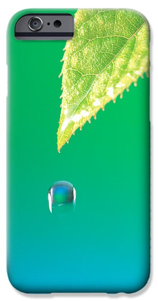 Cut-outs iPhone Cases - Droplet Falling From Green Leaf iPhone Case by Panoramic Images