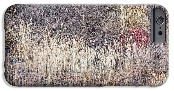 Fall Grass iPhone Cases - Dry grasses and bare trees in winter forest iPhone Case by Elena Elisseeva