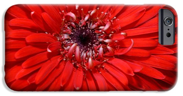 Red Abstract iPhone Cases - Dsc1512z-002 iPhone Case by Kimberlie Gerner