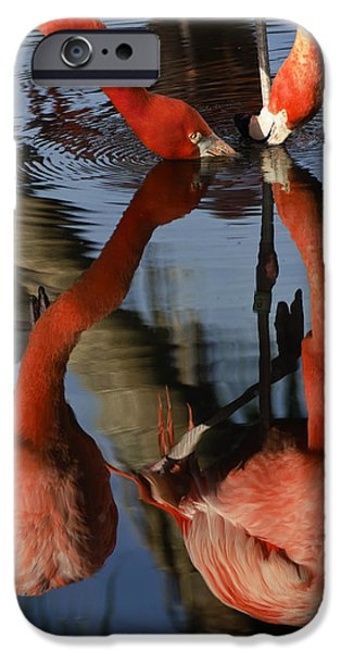 Dark Pink iPhone Cases - Dual Flamingo Reflections iPhone Case by Dave Dilli