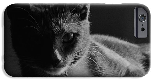 Duchess iPhone Cases - Duchess iPhone Case by George Cartledge