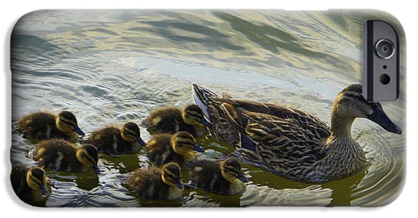 Baby Bird iPhone Cases - Duck Family iPhone Case by Laurie Perry