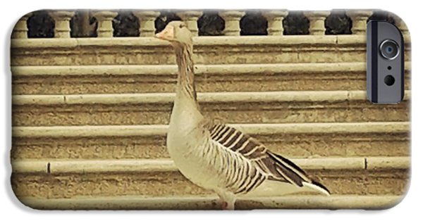 Staris iPhone Cases - Duck in the stair iPhone Case by Victoria Herrera