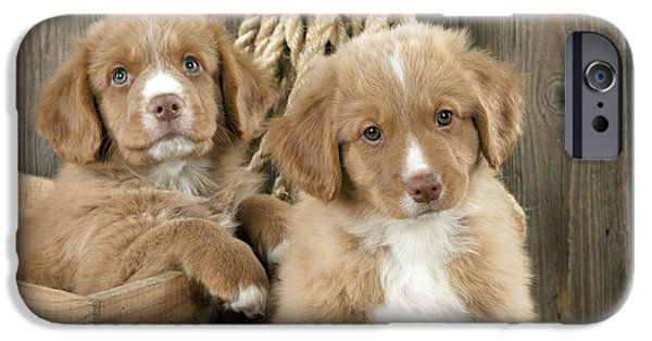 Cute Puppy iPhone Cases - Duck Tolling Retriever Puppies iPhone Case by John Daniels