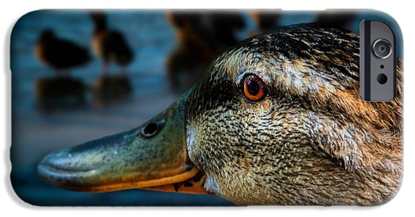 Duck iPhone Cases - Duck Watching Ducks iPhone Case by Bob Orsillo