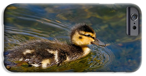 Baby Bird iPhone Cases - Duckling iPhone Case by Bonnie Fink