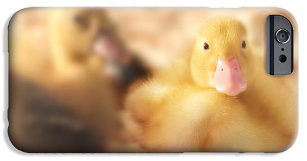 Duckling Photography iPhone Cases - Duckling iPhone Case by Shelley Neff