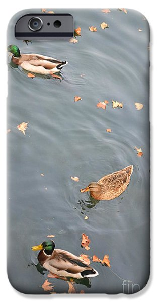 Fall Ceramics iPhone Cases - Ducks and Autumn Leaves iPhone Case by Kathleen Pio