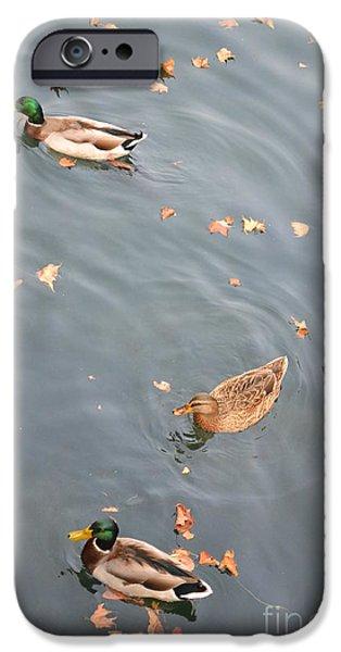 Autumn Scenes Ceramics iPhone Cases - Ducks and Autumn Leaves iPhone Case by Kathleen Pio