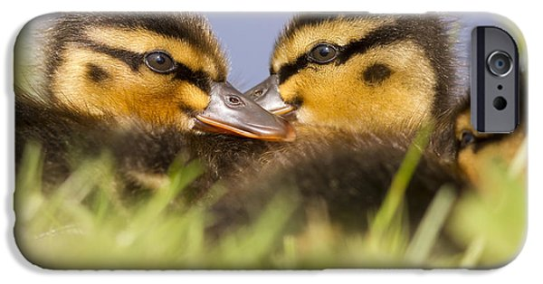 Repetition Photographs iPhone Cases - Ducktwins iPhone Case by Roeselien Raimond