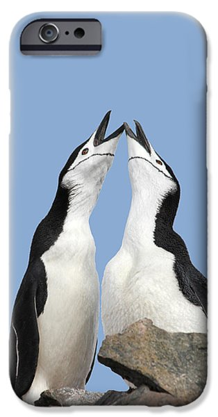 Couple iPhone Cases - Duet iPhone Case by Ginny Barklow