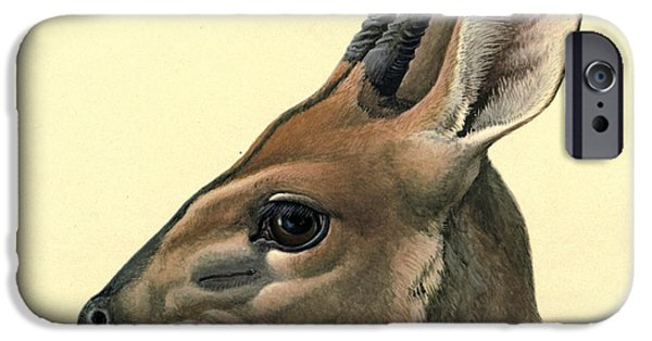 Ethiopia iPhone Cases - Duiker iPhone Case by Louis Agassiz Fuertes