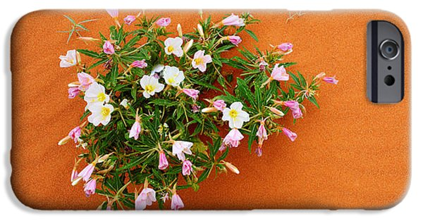 High Park Fire iPhone Cases - Dune Evening Primrose Flowers In Sand iPhone Case by Panoramic Images